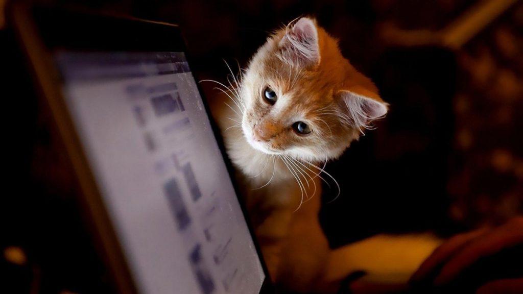 cat comp